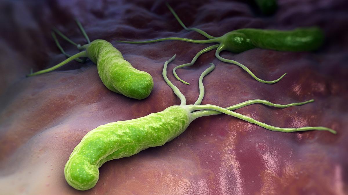 bakterier i magsäcken
