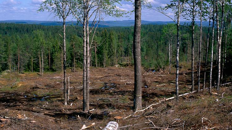 Döda träd, både stående och liggande, är mycket viktiga för många rödlistade arter och mängden död ved ökade med 70% mellan 1997 och 2007.