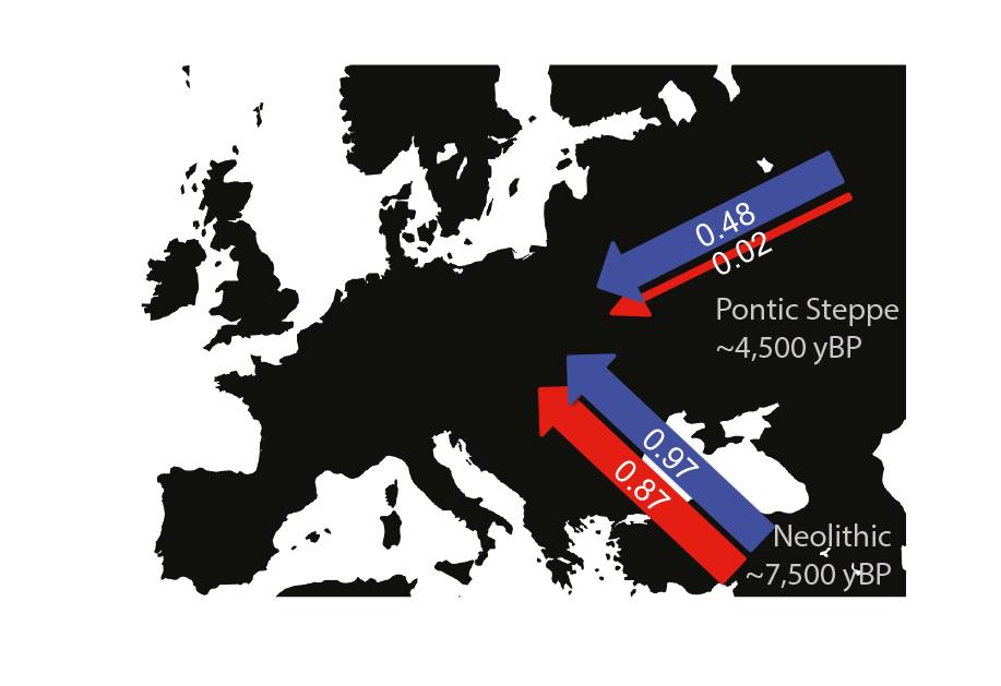 Manligt (blått) och kvinnligt (rött) bidrag till migrationen västerut