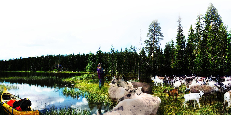 """Scenario 3: """"Stark rennäring"""" kännetecknas av att den nordiska samekonventionen är underskriven och tillämpad, rennäringen stärks, ökat statligt skogsägande och vildmarksturism. Fotomontage: Charlotta Gard"""