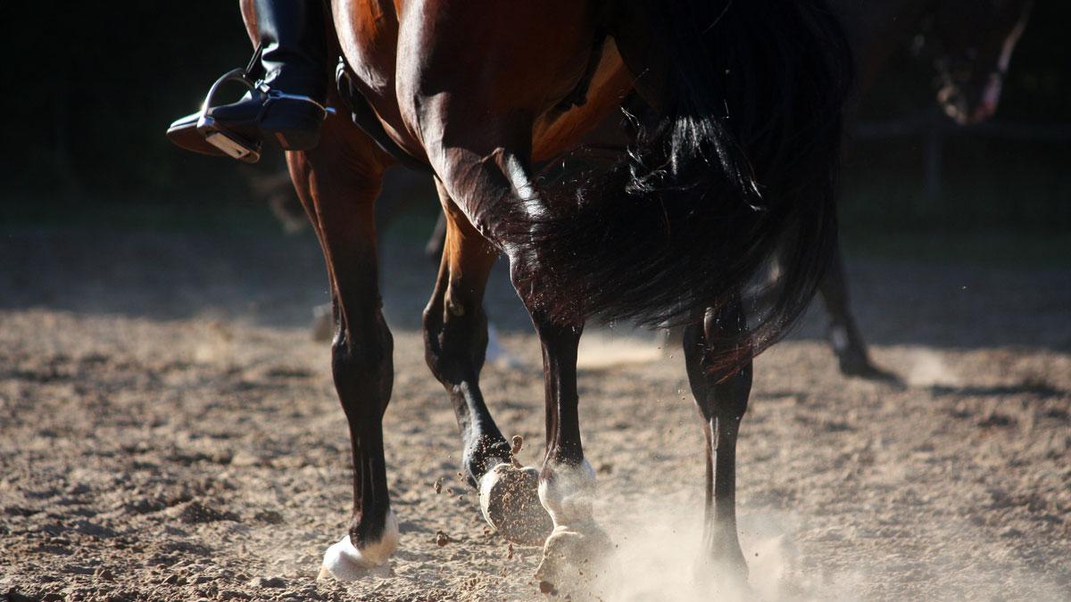 kortison till häst