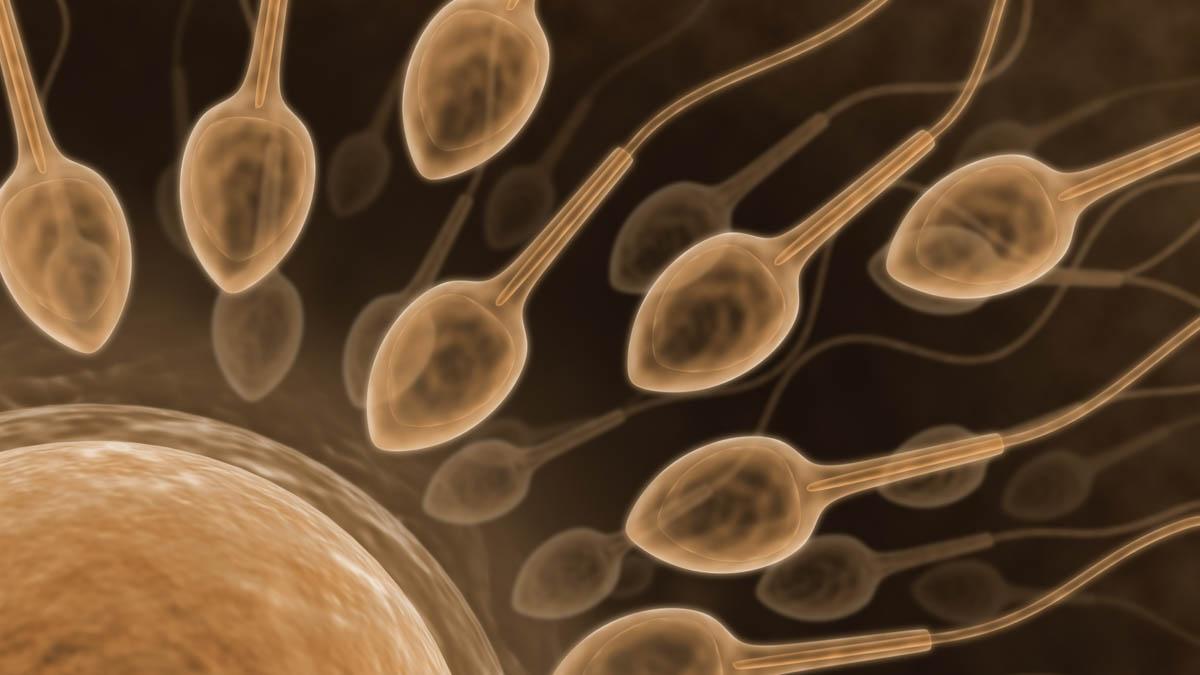 inga spermier hur stor chans