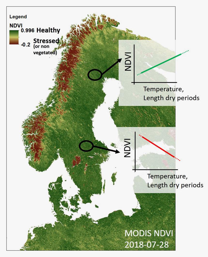 Torka och hetta minskar skogens tillväxt i stora delar av landet