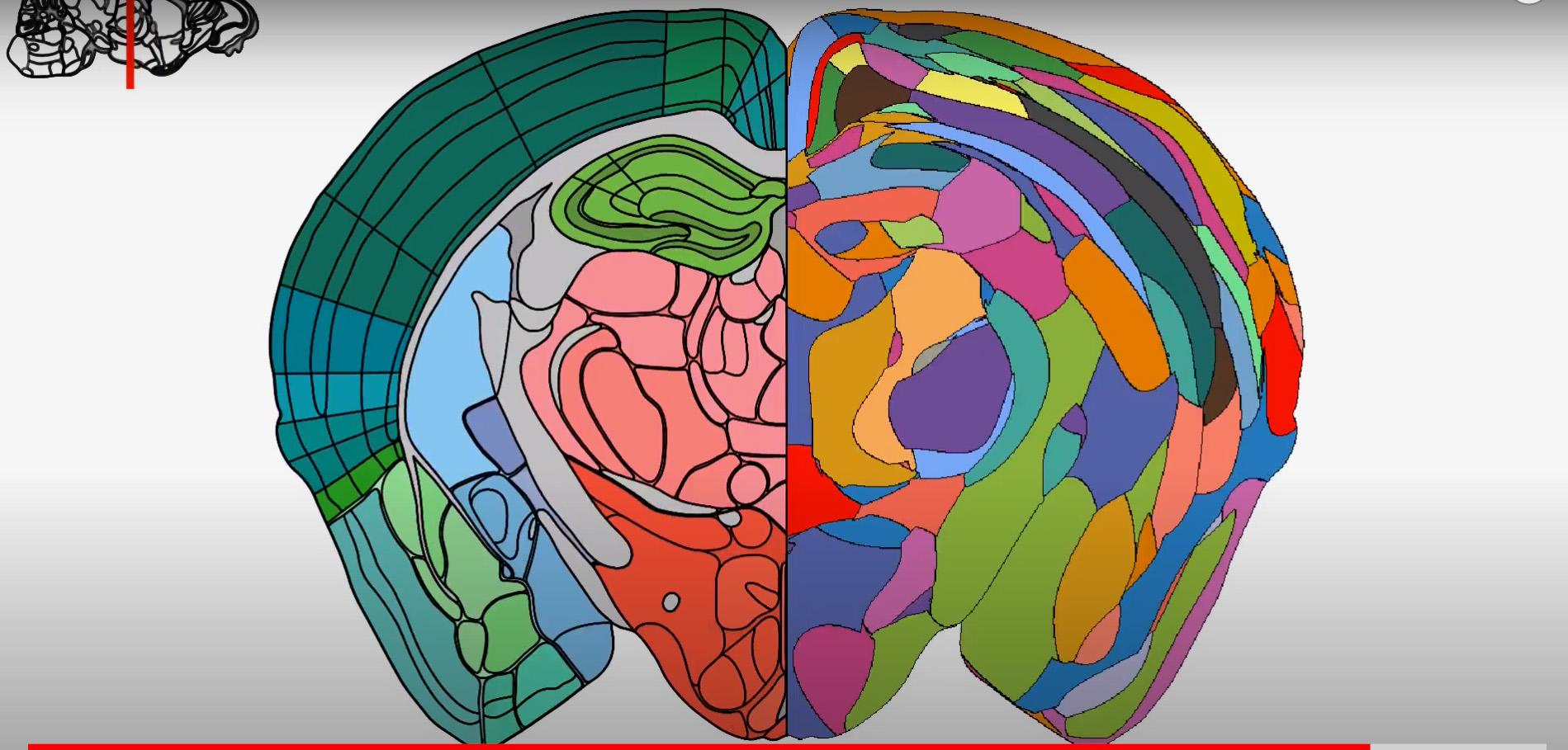 Nytt sätt att kartlägga hjärnans olika områden