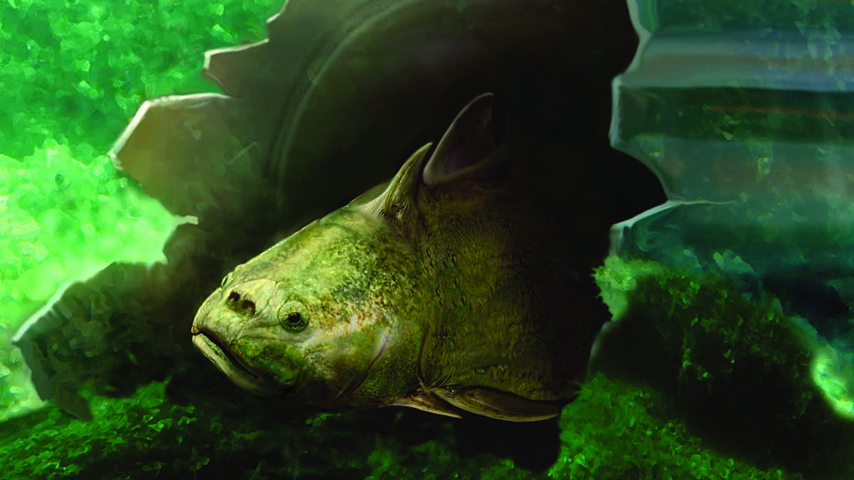 Våra tänders historia börjar med de bepansrade fiskarna