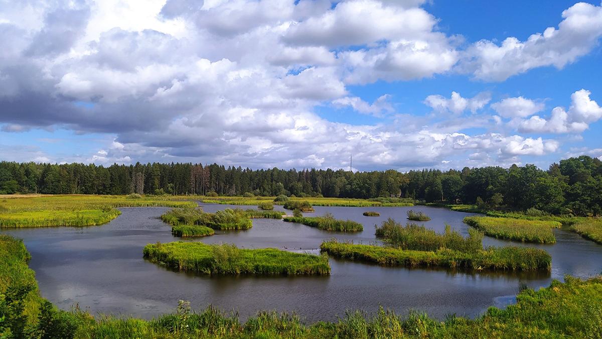 Dalkarlskärret i Hammarskog, Uppland.