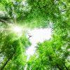Fågel sedd underifrån när den flyger genom trädtoppar.